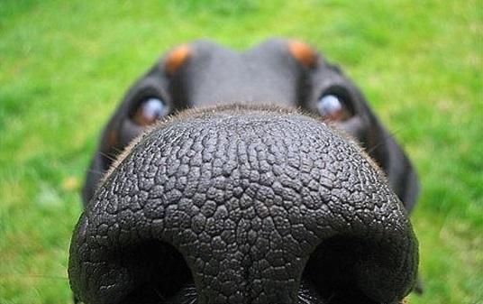 dog_funny